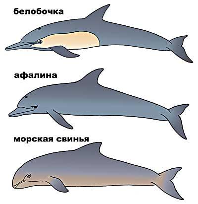 Re дельфины чёрного моря